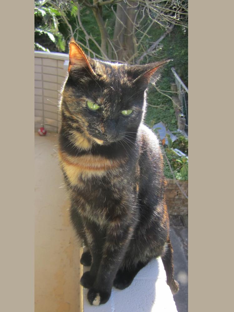 fifi_domestic-cat